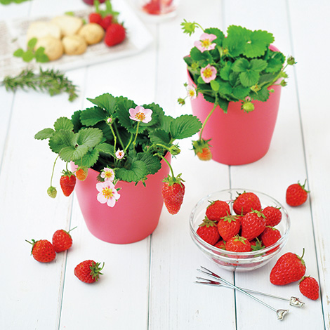 gd796_berry_img